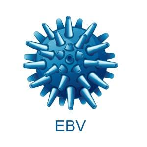 Epstein-Barr (EBV) / Human herpesvirus 4 / Мононуклеоза -